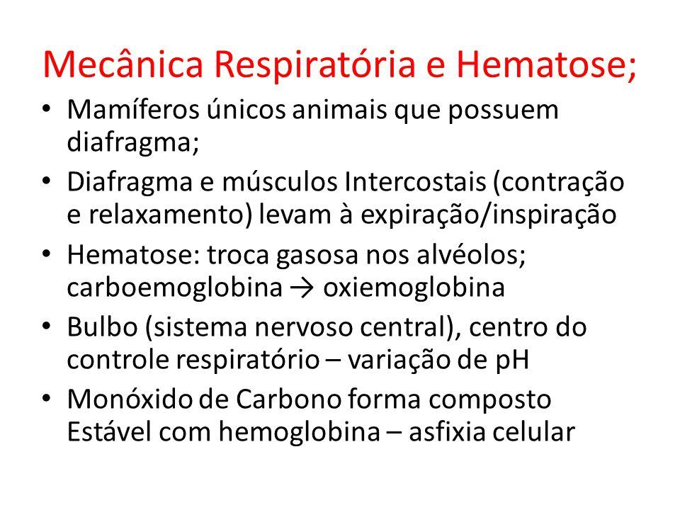 Mecânica Respiratória e Hematose;