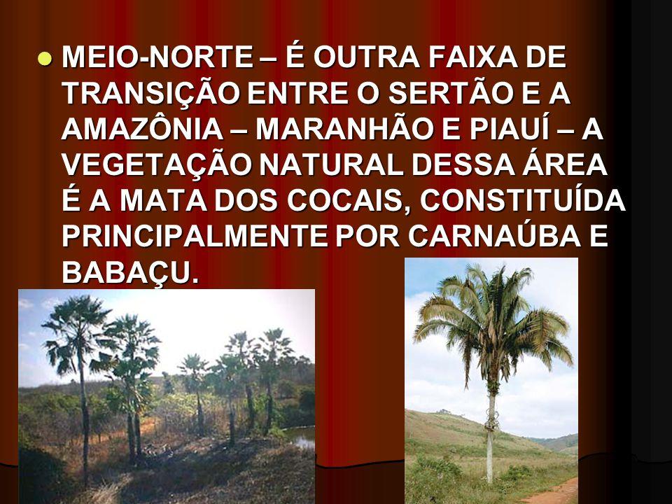 MEIO-NORTE – É OUTRA FAIXA DE TRANSIÇÃO ENTRE O SERTÃO E A AMAZÔNIA – MARANHÃO E PIAUÍ – A VEGETAÇÃO NATURAL DESSA ÁREA É A MATA DOS COCAIS, CONSTITUÍDA PRINCIPALMENTE POR CARNAÚBA E BABAÇU.