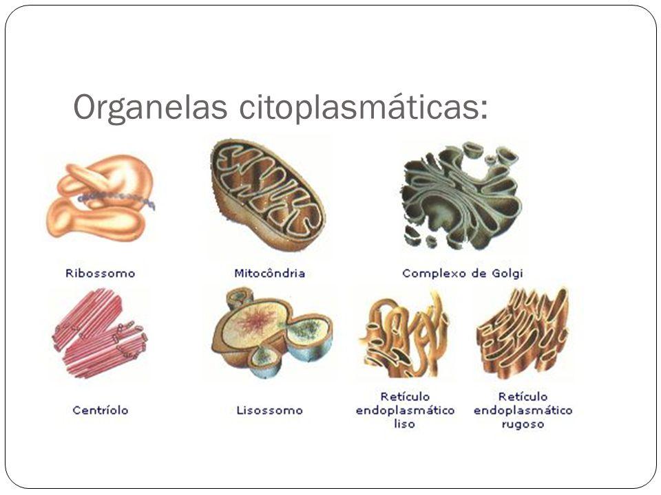 Organelas citoplasmáticas: