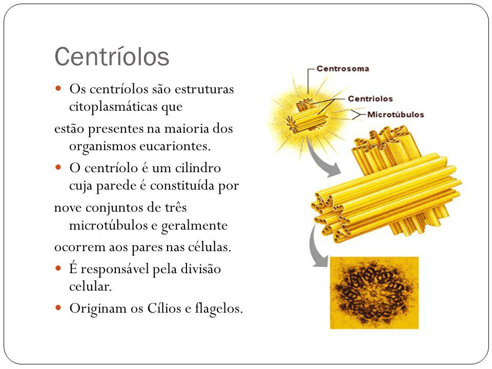 Centríolos Os centríolos são estruturas citoplasmáticas que