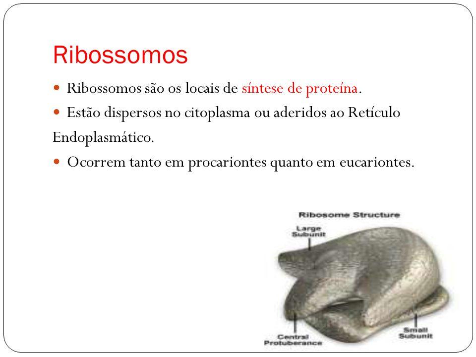 Ribossomos Ribossomos são os locais de síntese de proteína.