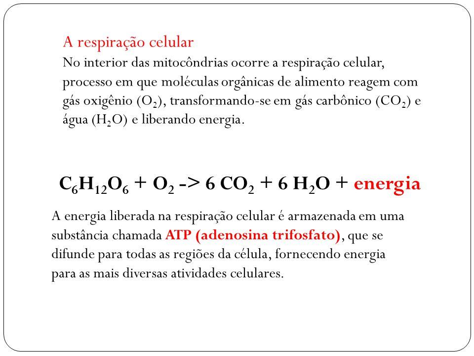 C6H12O6 + O2 -> 6 CO2 + 6 H2O + energia
