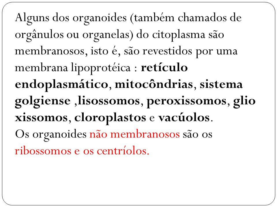 Os organoides não membranosos são os ribossomos e os centríolos.