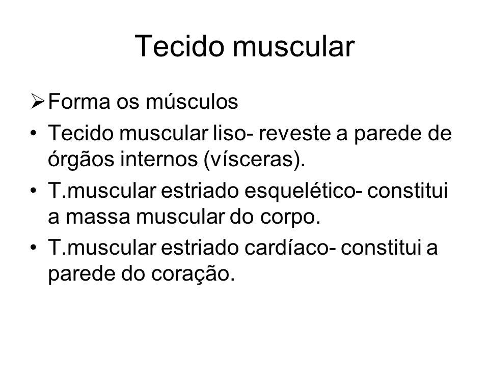 Tecido muscular Forma os músculos