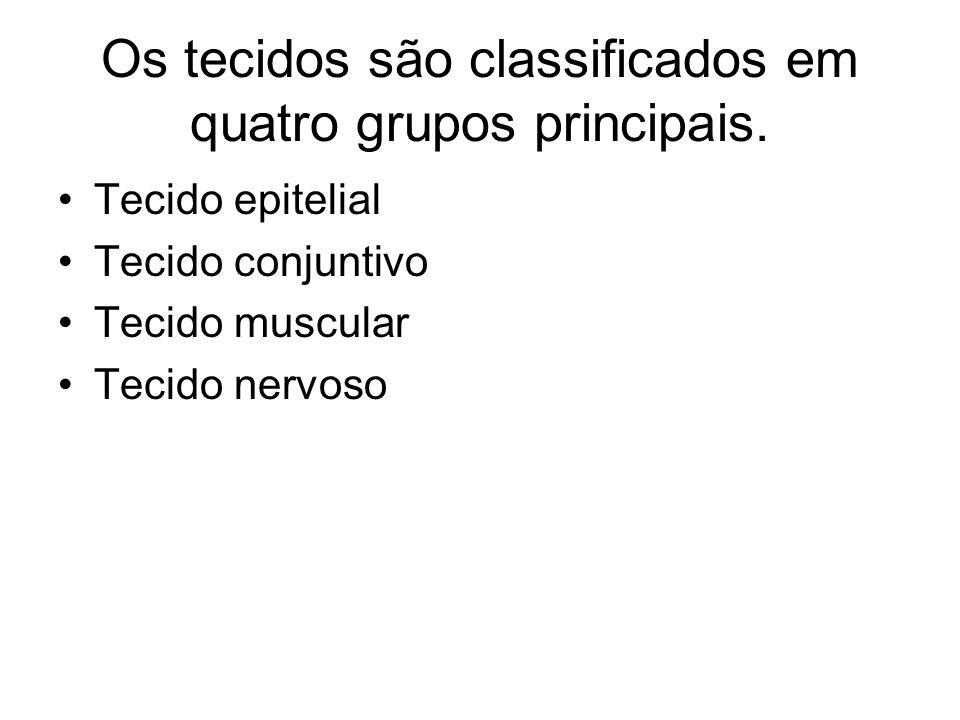 Os tecidos são classificados em quatro grupos principais.