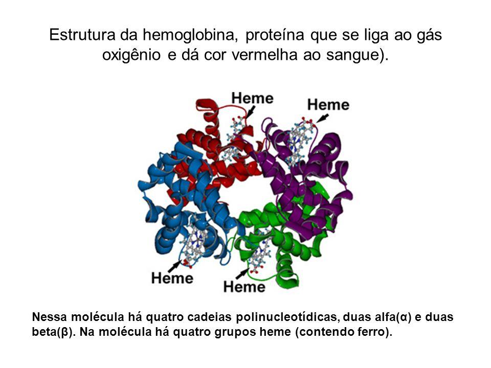 Estrutura da hemoglobina, proteína que se liga ao gás oxigênio e dá cor vermelha ao sangue).