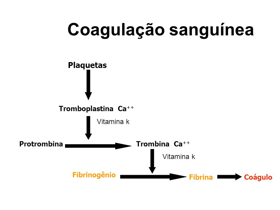 Coagulação sanguínea Plaquetas Tromboplastina Ca++ Vitamina k