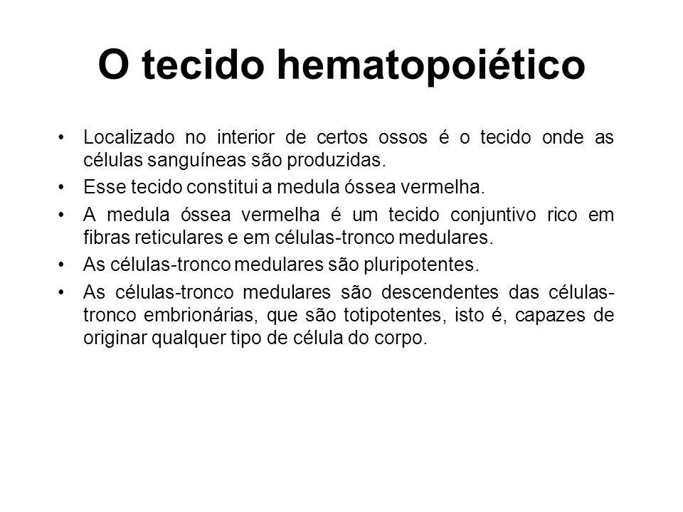 O tecido hematopoiético