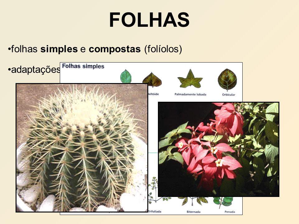 FOLHAS folhas simples e compostas (folíolos)