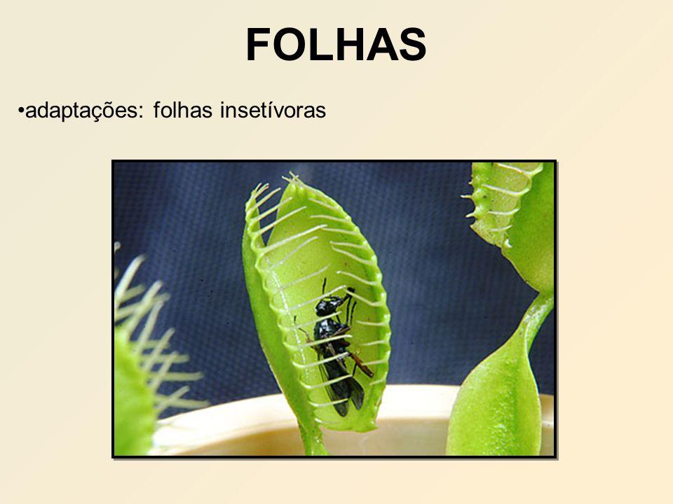 adaptações: folhas insetívoras