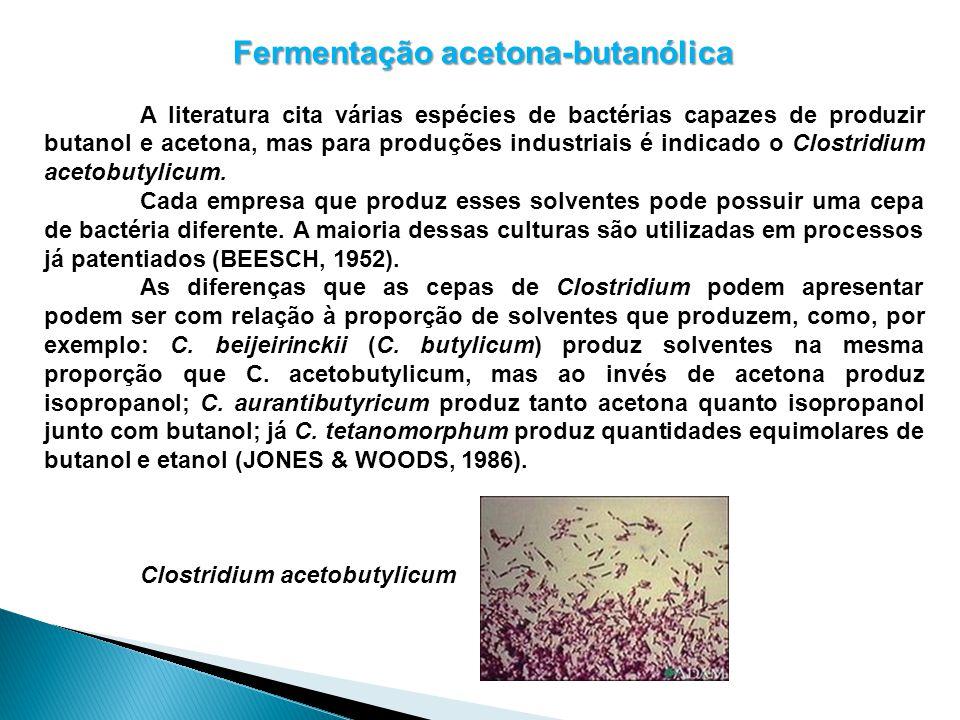 Fermentação acetona-butanólica