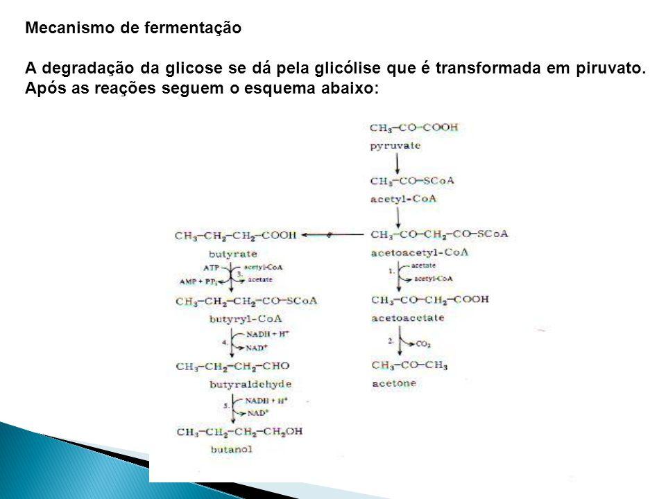 Mecanismo de fermentação