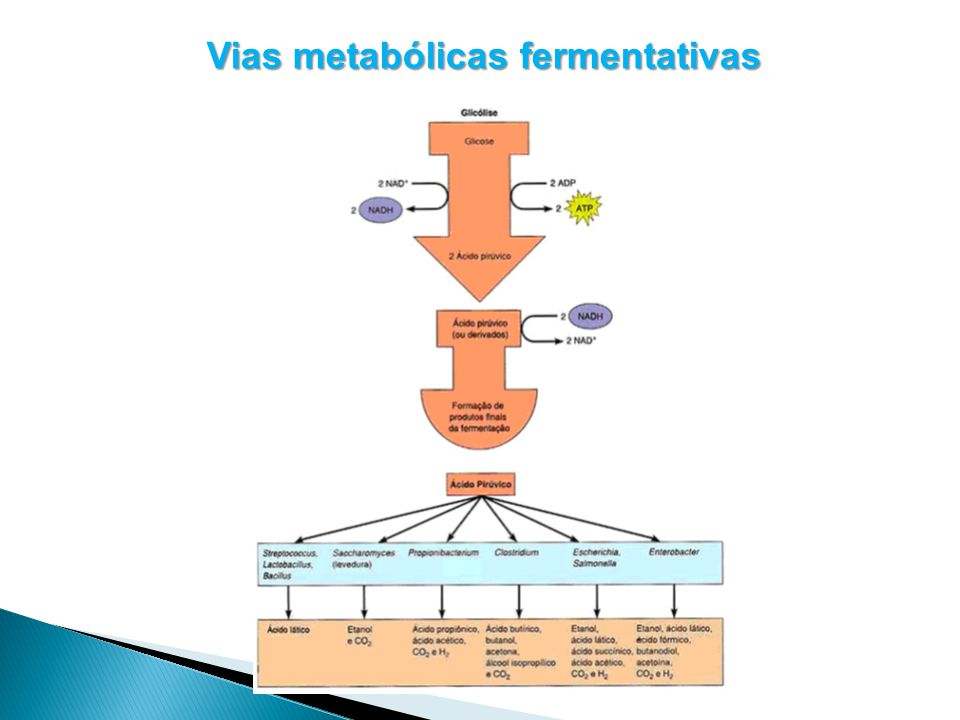 Vias metabólicas fermentativas