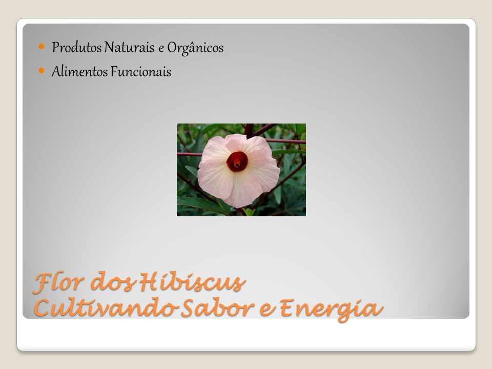 Flor dos Hibiscus Cultivando Sabor e Energia