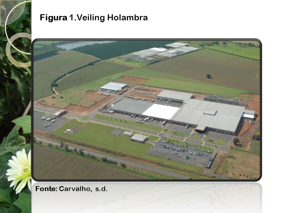 Figura 1.Veiling Holambra
