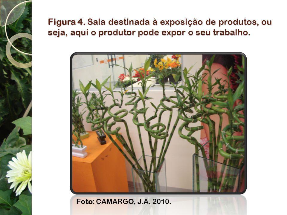 Figura 4. Sala destinada à exposição de produtos, ou seja, aqui o produtor pode expor o seu trabalho.