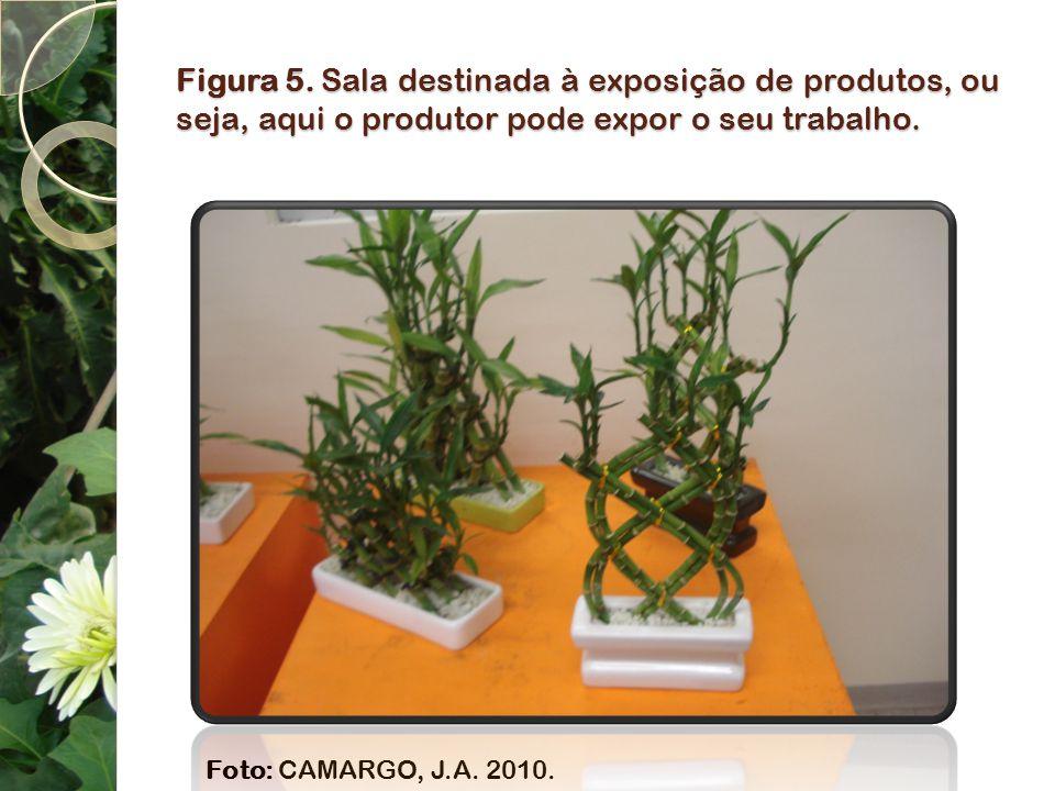 Figura 5. Sala destinada à exposição de produtos, ou seja, aqui o produtor pode expor o seu trabalho.