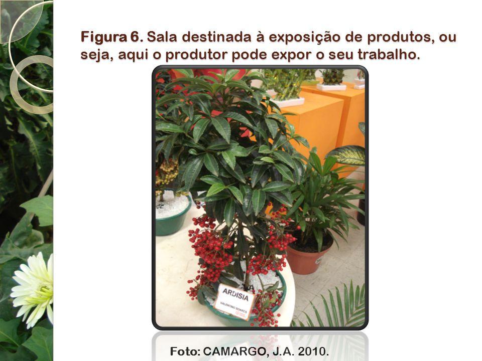 Figura 6. Sala destinada à exposição de produtos, ou seja, aqui o produtor pode expor o seu trabalho.
