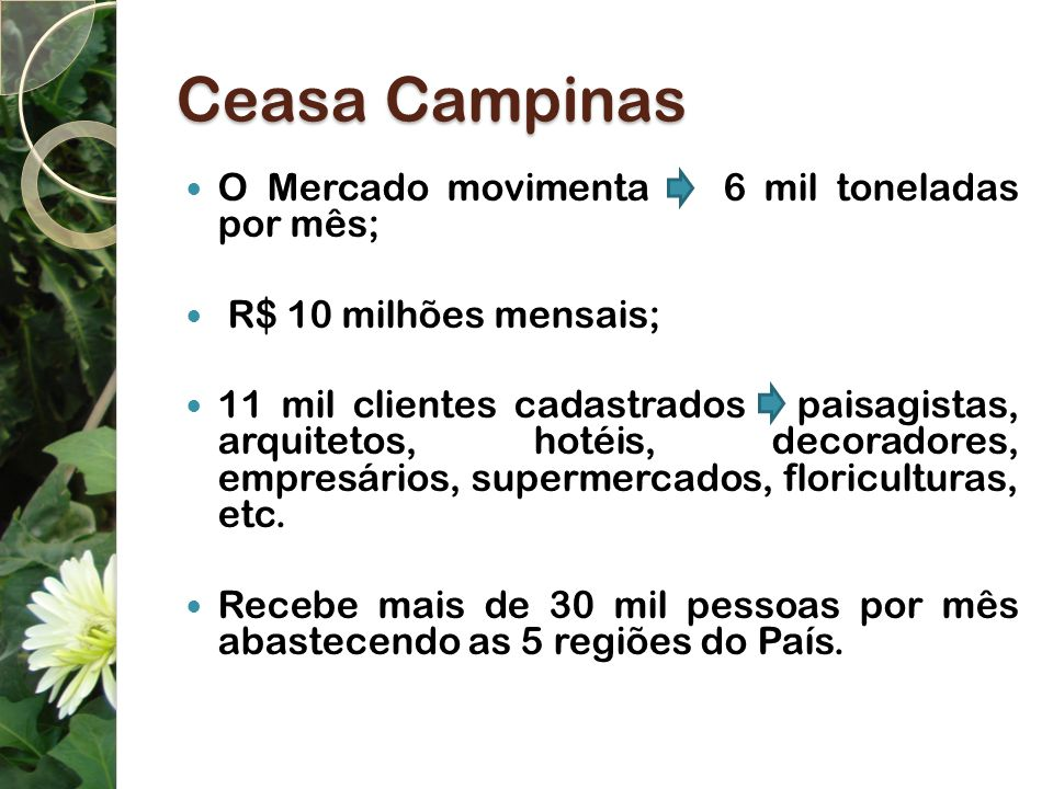 Ceasa Campinas O Mercado movimenta 6 mil toneladas por mês;