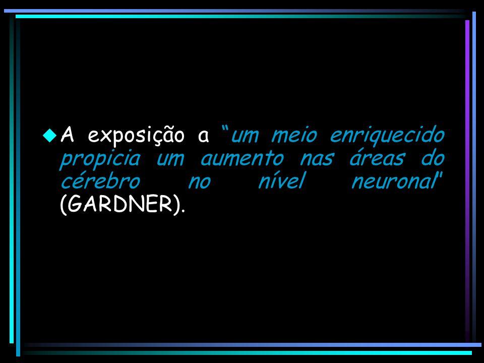 A exposição a um meio enriquecido propicia um aumento nas áreas do cérebro no nível neuronal (GARDNER).