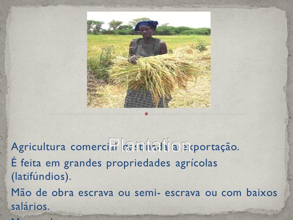 Plantation Agricultura comercial destinada a exportação.