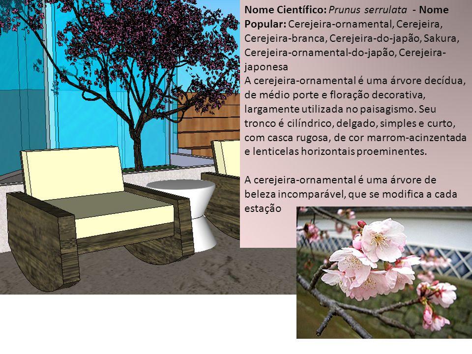 Nome Científico: Prunus serrulata - Nome Popular: Cerejeira-ornamental, Cerejeira, Cerejeira-branca, Cerejeira-do-japão, Sakura, Cerejeira-ornamental-do-japão, Cerejeira-japonesa
