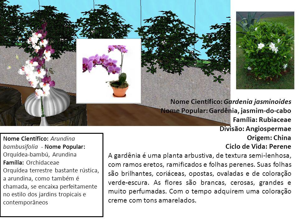 Nome Científico: Gardenia jasminoides