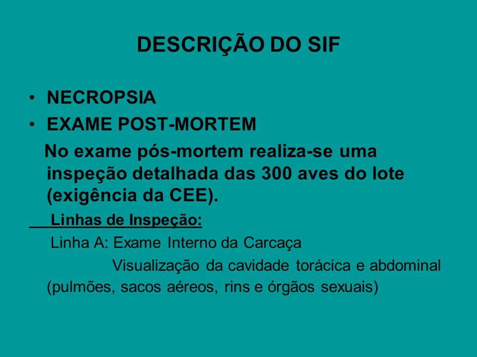 DESCRIÇÃO DO SIF NECROPSIA EXAME POST-MORTEM