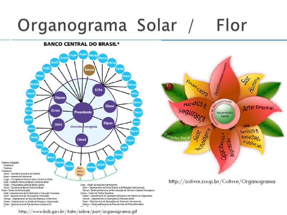 Organograma Solar / Flor