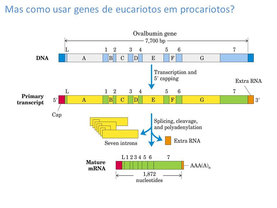 Mas como usar genes de eucariotos em procariotos