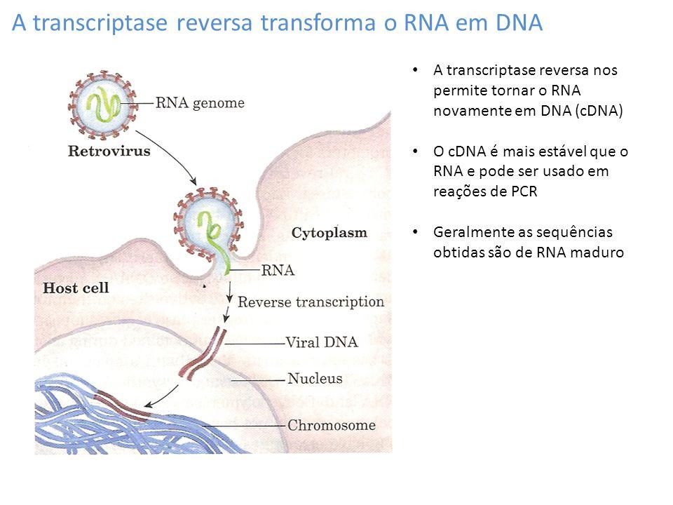 A transcriptase reversa transforma o RNA em DNA