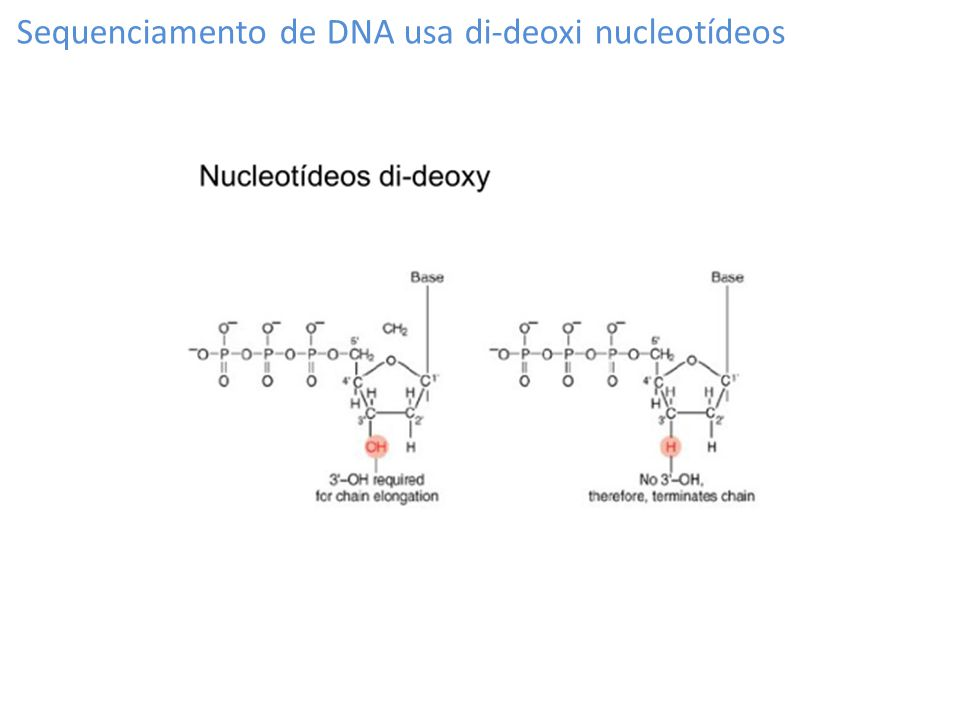 Sequenciamento de DNA usa di-deoxi nucleotídeos