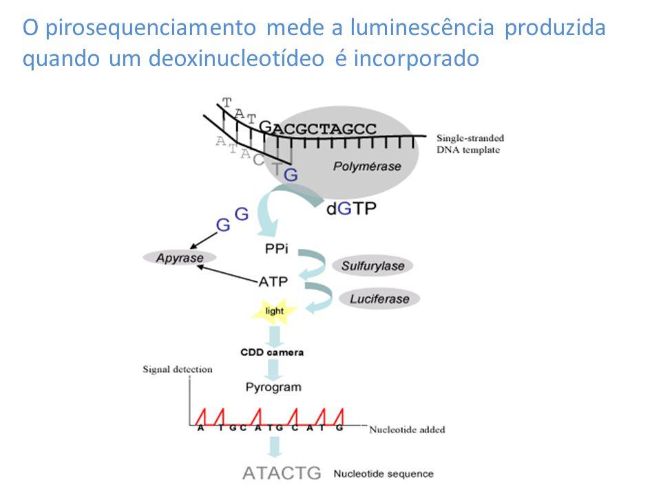 O pirosequenciamento mede a luminescência produzida quando um deoxinucleotídeo é incorporado