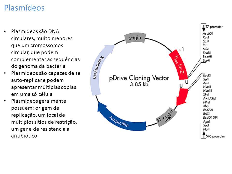Plasmídeos Plasmídeos são DNA circulares, muito menores que um cromossomos circular, que podem complementar as sequências do genoma da bactéria.