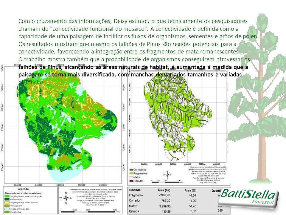 Com o cruzamento das informações, Deisy estimou o que tecnicamente os pesquisadores chamam de conectividade funcional do mosaico . A conectividade é definida como a capacidade de uma paisagem de facilitar os fluxos de organismos, sementes e grãos de pólen. Os resultados mostram que mesmo os talhões de Pinus são regiões potenciais para a conectividade, favorecendo a integração entre os fragmentos de mata remanescentes.