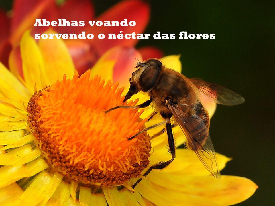 Abelhas voando sorvendo o néctar das flores
