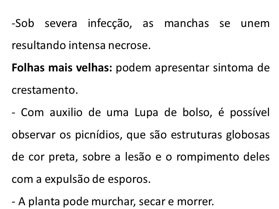 -Sob severa infecção, as manchas se unem resultando intensa necrose.