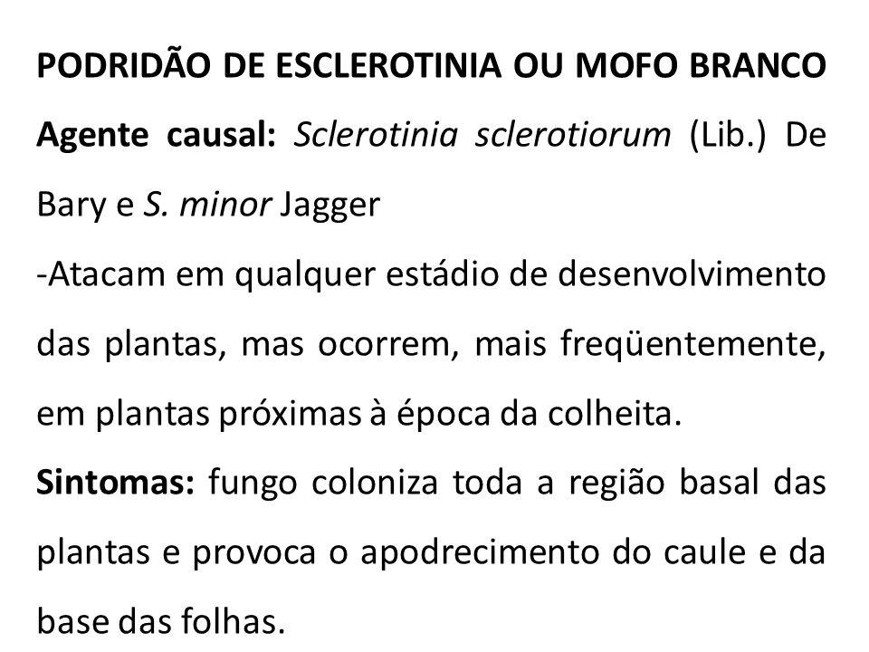 PODRIDÃO DE ESCLEROTINIA OU MOFO BRANCO Agente causal: Sclerotinia sclerotiorum (Lib.) De Bary e S. minor Jagger