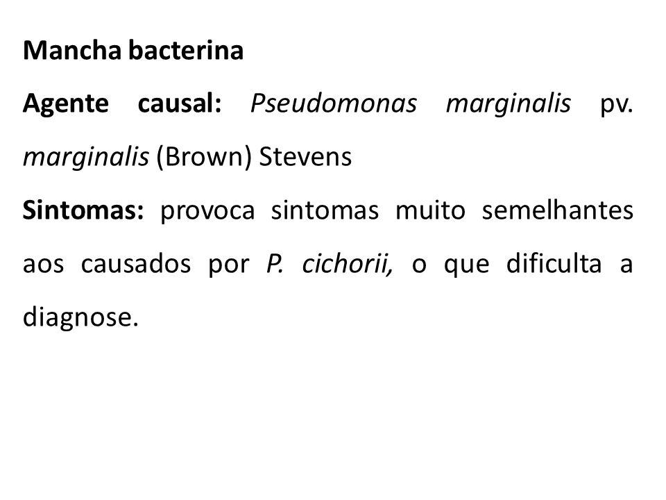 Mancha bacterina Agente causal: Pseudomonas marginalis pv. marginalis (Brown) Stevens.