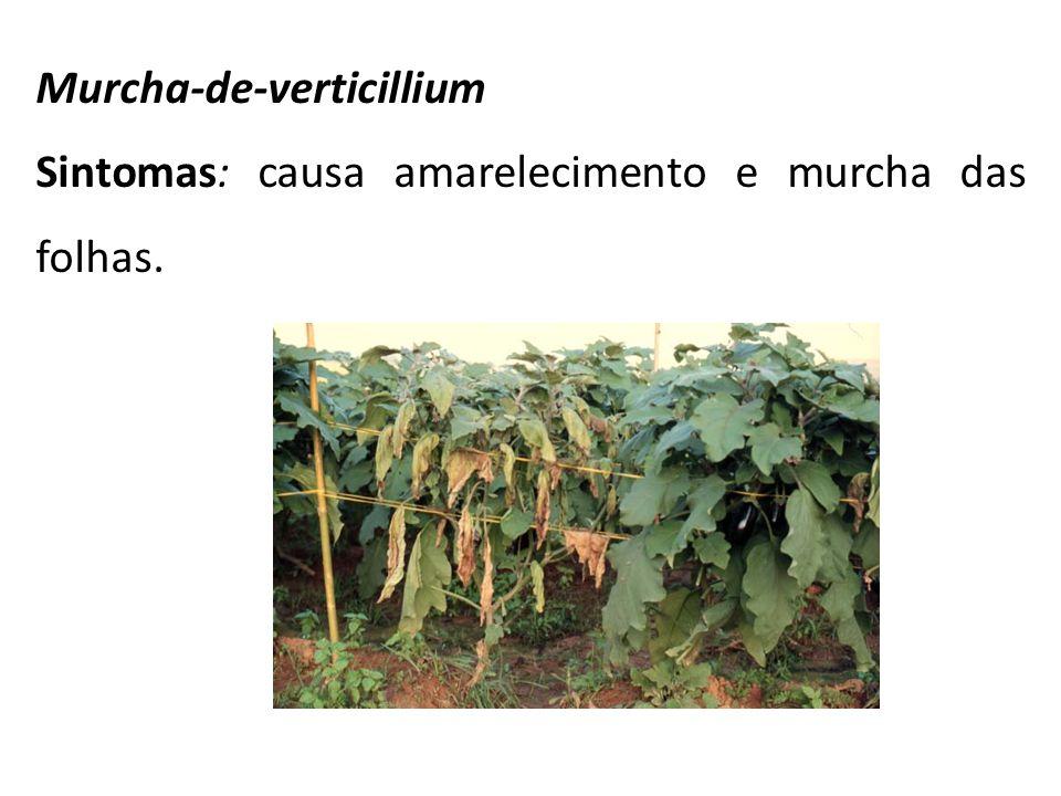 Murcha-de-verticillium