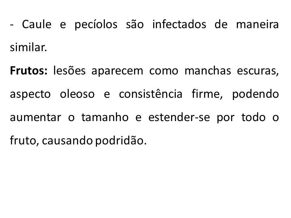 - Caule e pecíolos são infectados de maneira similar.