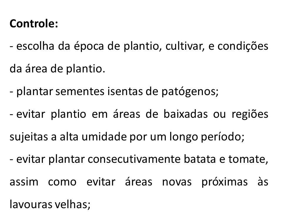 Controle: escolha da época de plantio, cultivar, e condições da área de plantio. plantar sementes isentas de patógenos;