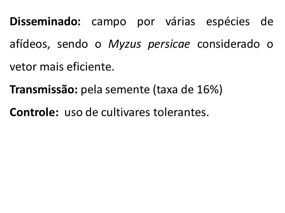 Disseminado: campo por várias espécies de afídeos, sendo o Myzus persicae considerado o vetor mais eficiente.