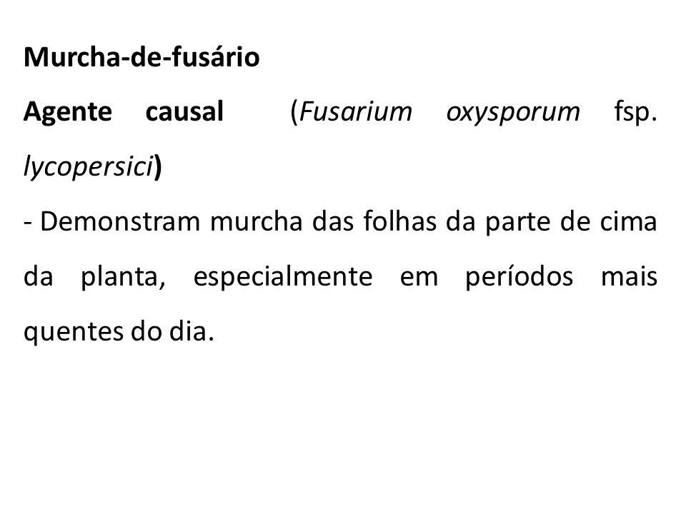 Murcha-de-fusário Agente causal (Fusarium oxysporum fsp. lycopersici)