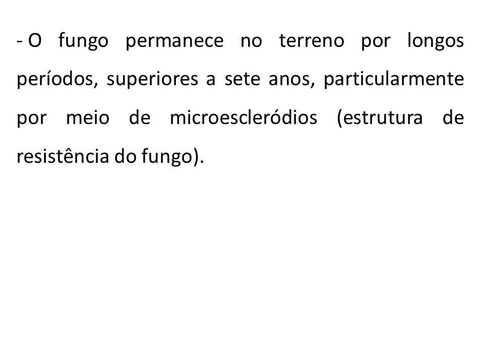 O fungo permanece no terreno por longos períodos, superiores a sete anos, particularmente por meio de microescleródios (estrutura de resistência do fungo).