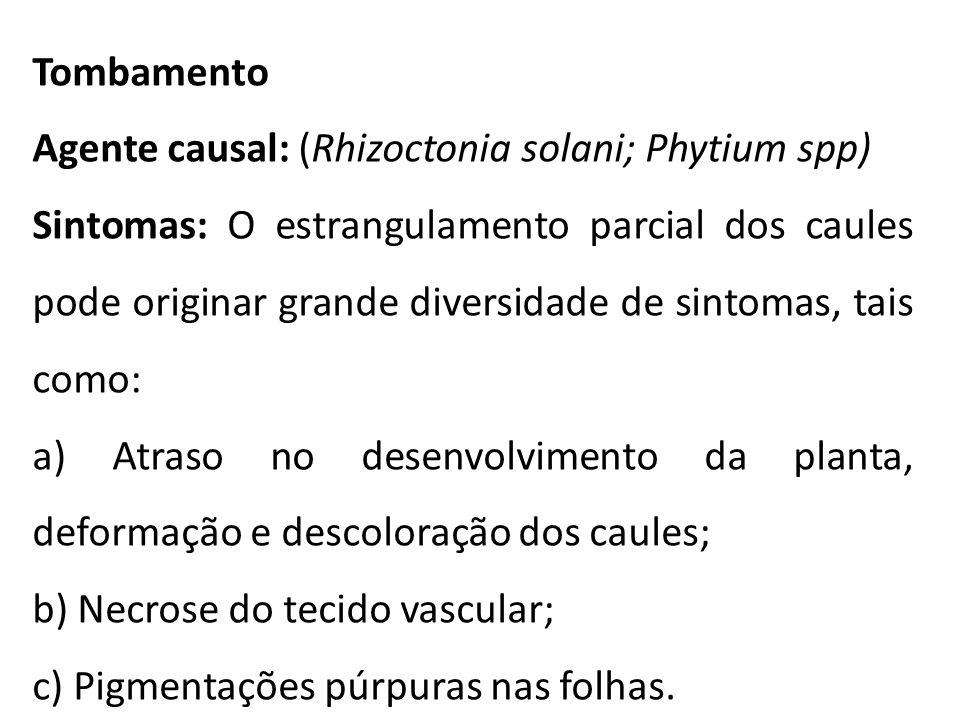 Tombamento Agente causal: (Rhizoctonia solani; Phytium spp)