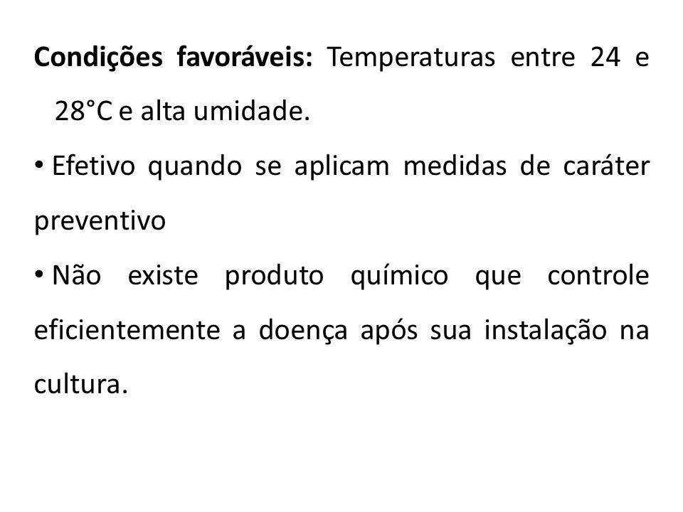 Condições favoráveis: Temperaturas entre 24 e 28°C e alta umidade.