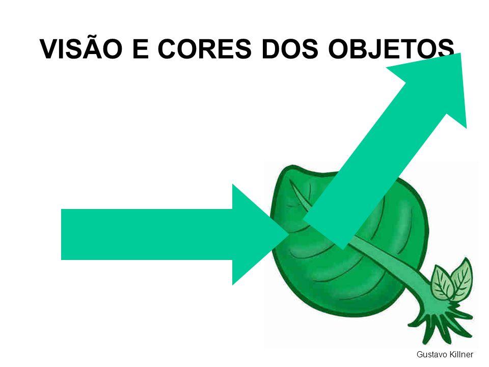 VISÃO E CORES DOS OBJETOS