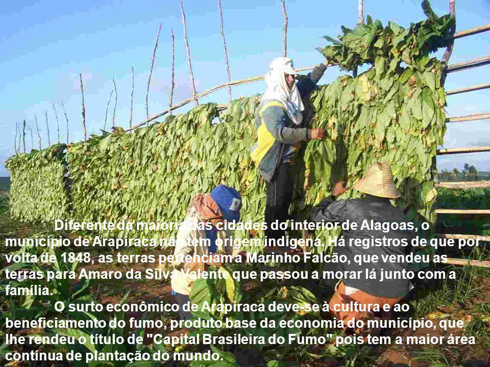 Diferente da maioria das cidades do interior de Alagoas, o município de Arapiraca não tem origem indígena. Há registros de que por volta de 1848, as terras pertenciam a Marinho Falcão, que vendeu as terras para Amaro da Silva Valente que passou a morar lá junto com a família.