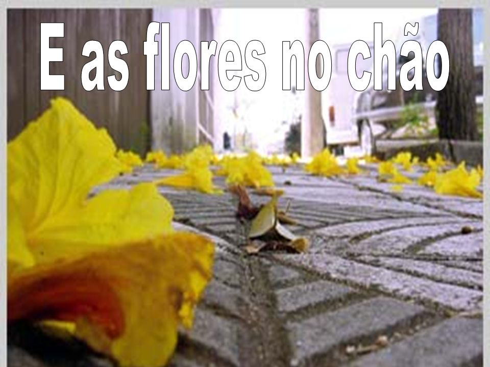 E as flores no chão